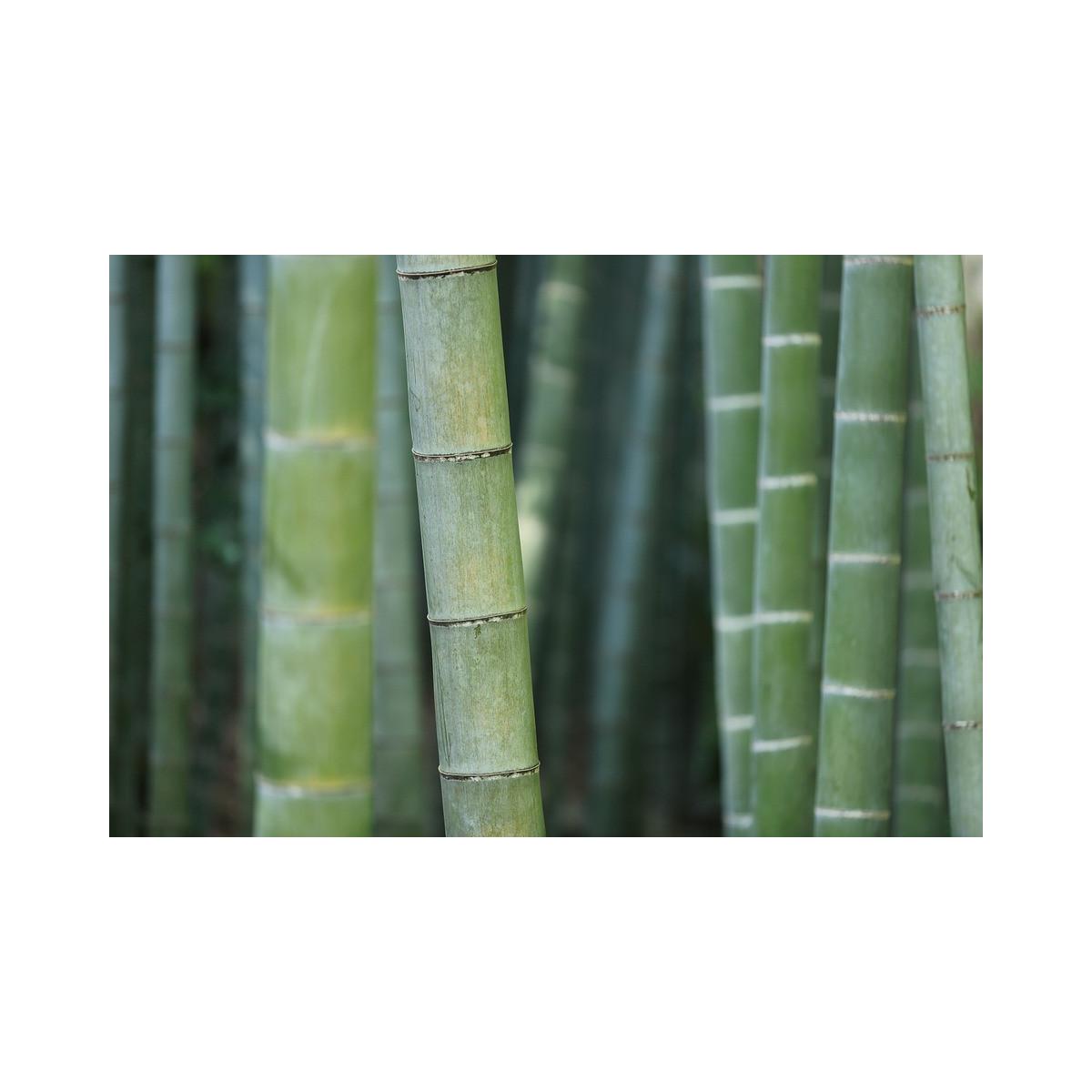 hydrolat de bambou aromat 39 easy. Black Bedroom Furniture Sets. Home Design Ideas
